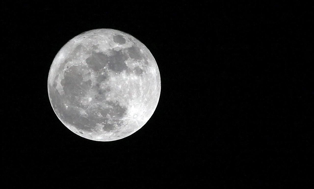 Una piantina di Cotone sul lato nascosto della Luna