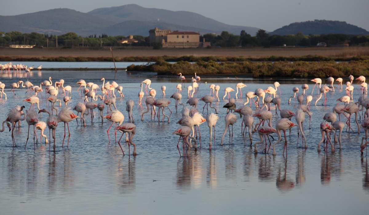 Nelle Oasi WWF il 2 e il 3 febbraio si festeggia la giornata mondiale delle zone umide