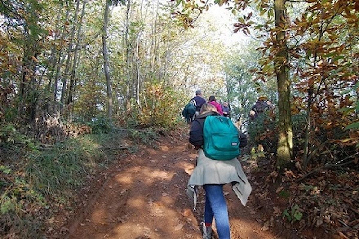 Quattro passi tra le foglie d'autunno, domenica 10 novembre scopriamo con Calyx le meraviglie del foliage in Oltrepo Pavese