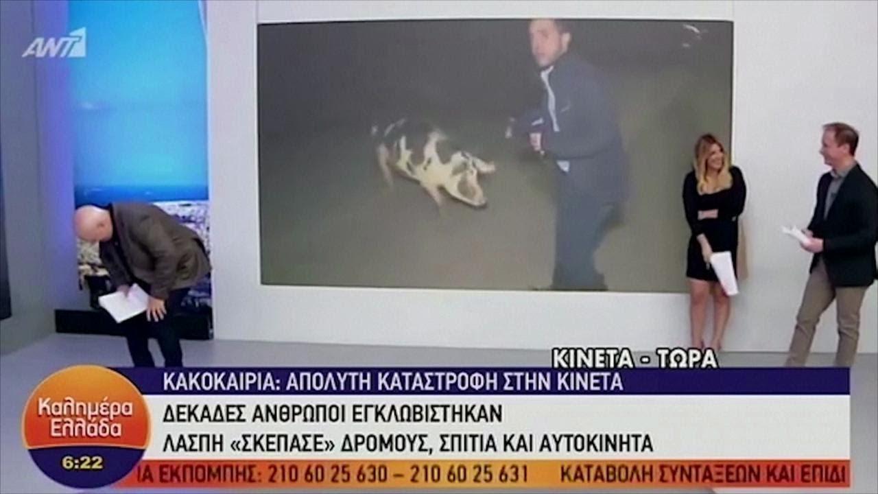 Grecia: Maiale attacca in diretta un giornalista greco