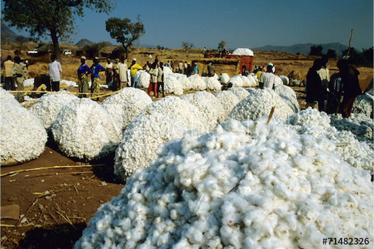 Offerta ancora troppo elevata, il cotone affonta il problema surplus