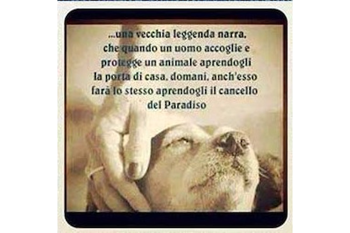 """Milazzo (ME) - """"Adotta un cane per amico"""", iniziativa dell'Amministrazione comunale"""