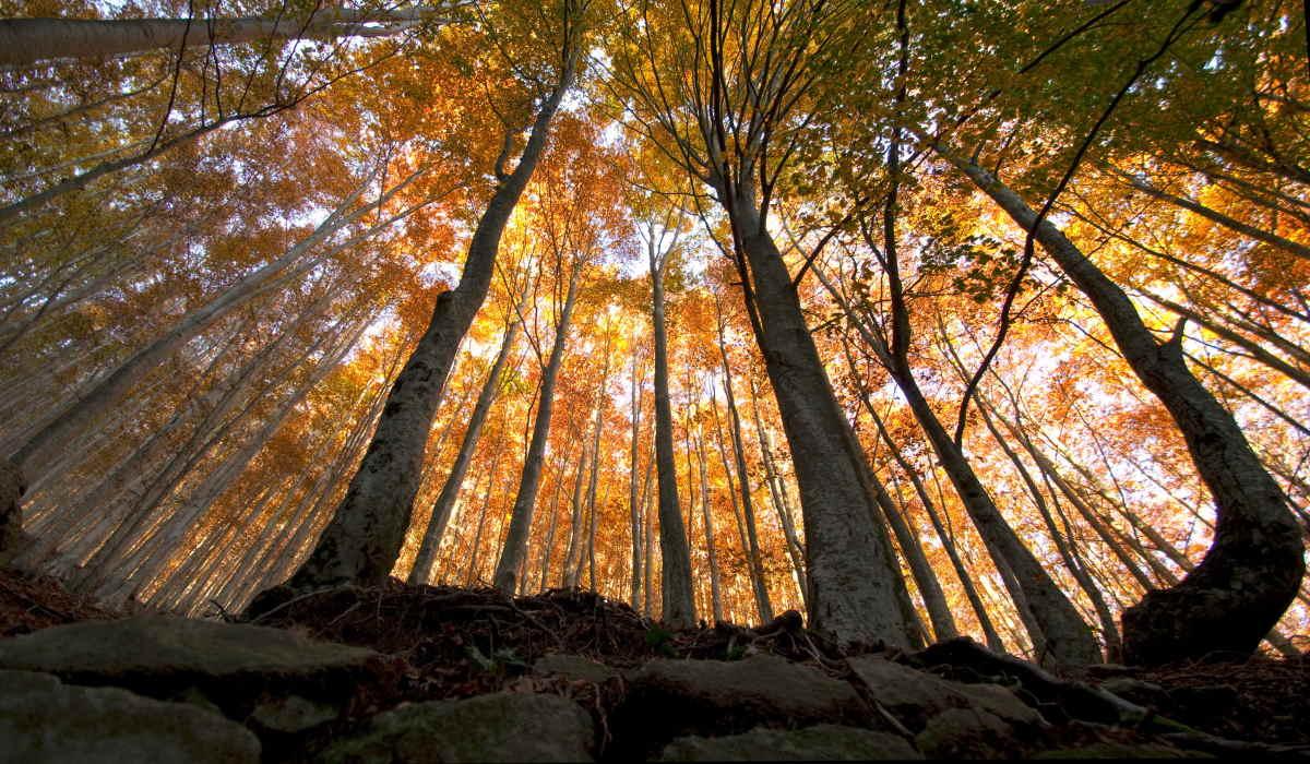 L'appello del WWF in occasione della Giornata Mondiale dedicata alle Foreste del 21 marzo