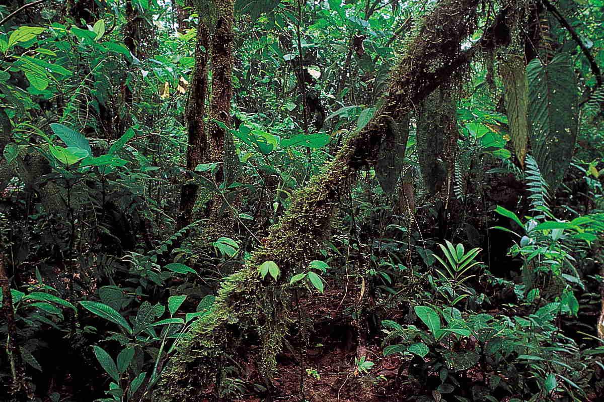 L'asteroide che ha causato la scomparsa dei dinosauri avrebbe dato origine alla foresta pluviale amazzonica