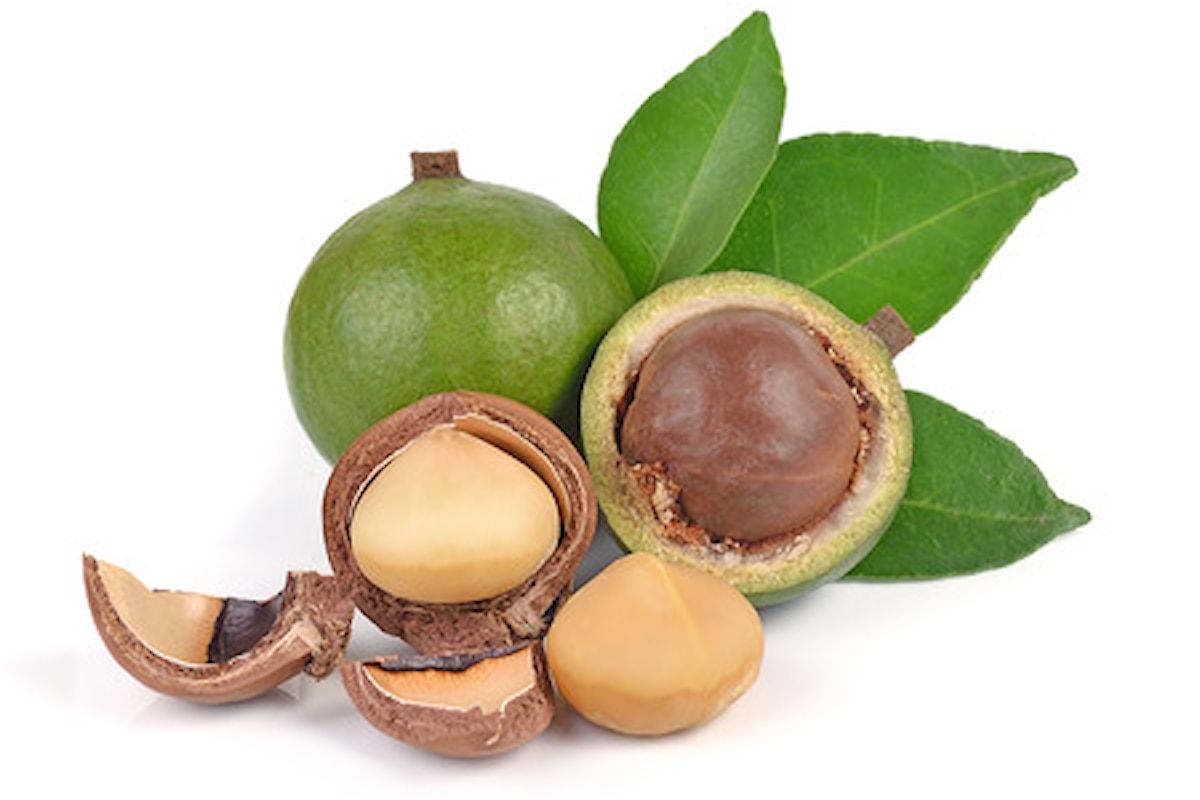 Noci di Macadamia: Proprietà e Benefici