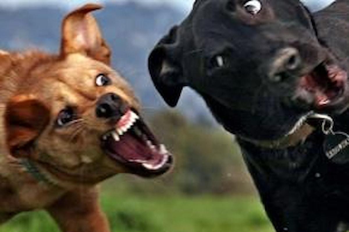 Perchè i cani litigano? Come risolvere il problema delle risse tra cani?