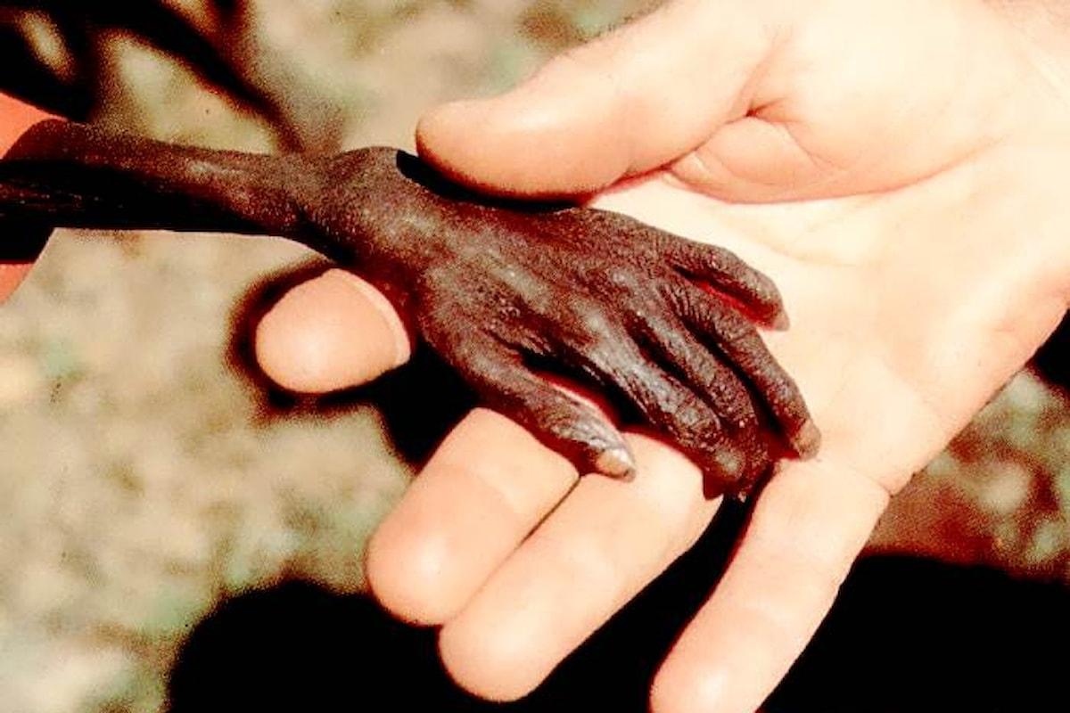 Save The Children denuncia che in Kenya 70mila bambini già malnutriti sono in pericolo di vita a causa della siccità