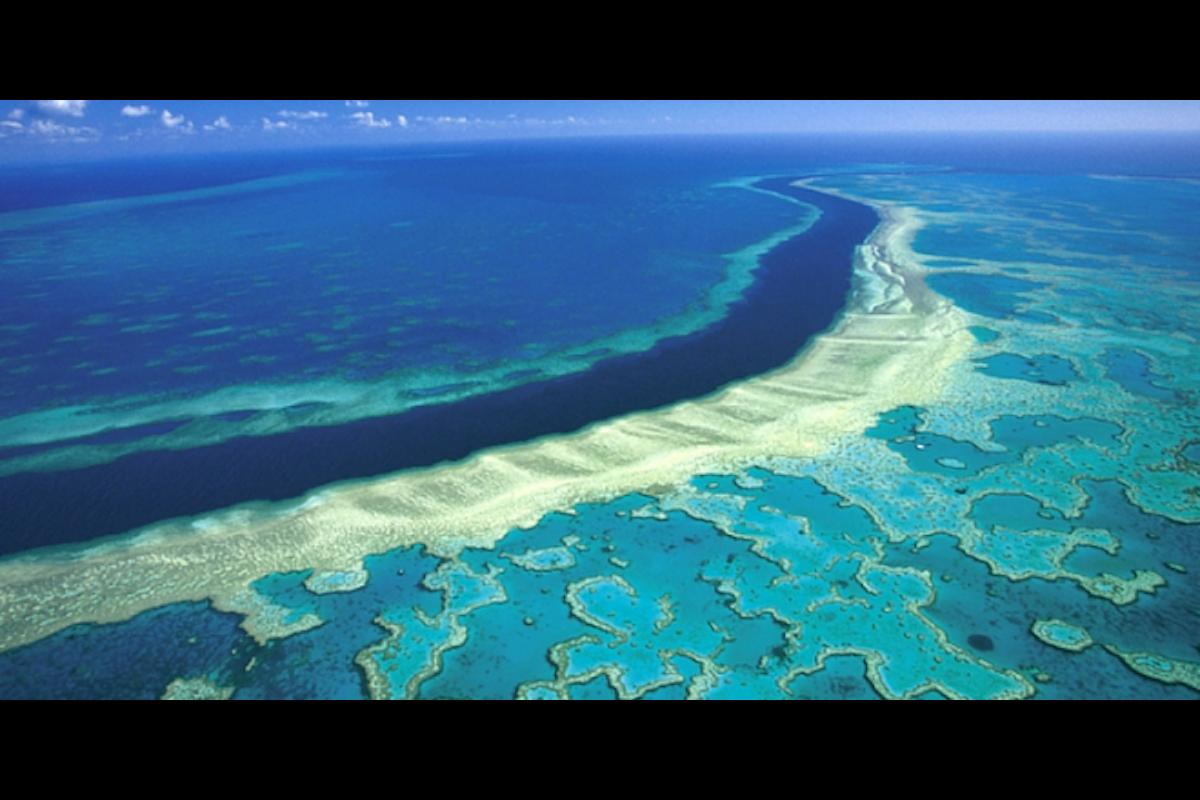 Barriera Corallina e buco nell'ozono: lo sbiancamento è un segno