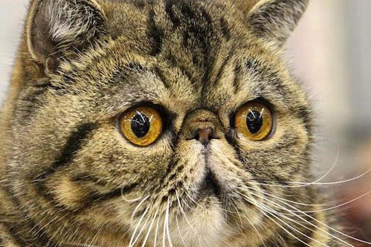 Perché io so' io... e voi non siete un gatto! A Roma il SuperCat Show 2017 dall'11 al 12 novembre