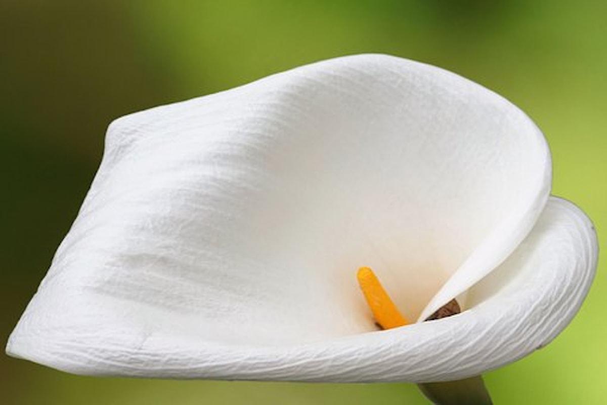 Psicologia del colore: il bianco, simbolo di armonia e purezza.
