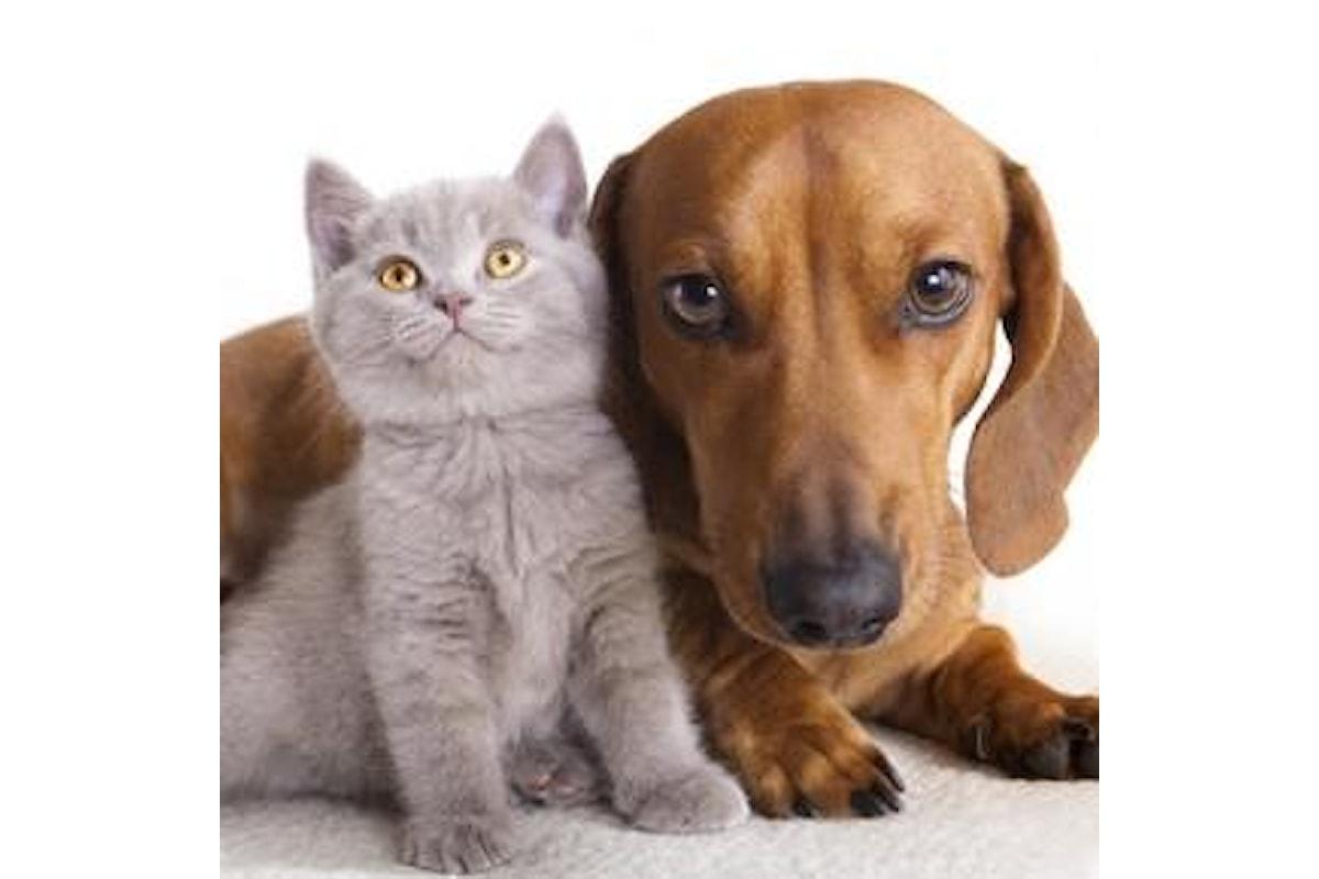 La filariosi nel cane e nel gatto: una malattia pericolosissima