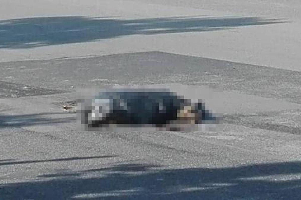 Cane ucciso e rinchiuso in un sacchetto di plastica, orrore nel salernitano