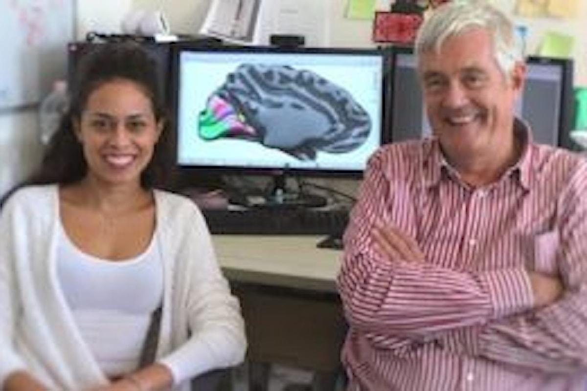 Scoperta da ricercatori degli atenei di Pisa e Firenze una nuova area del cervello umano