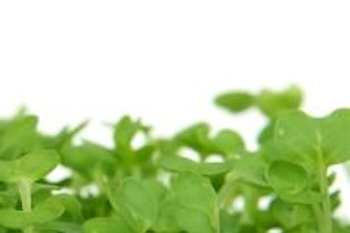 Crescione d'acqua proprietàe benefici