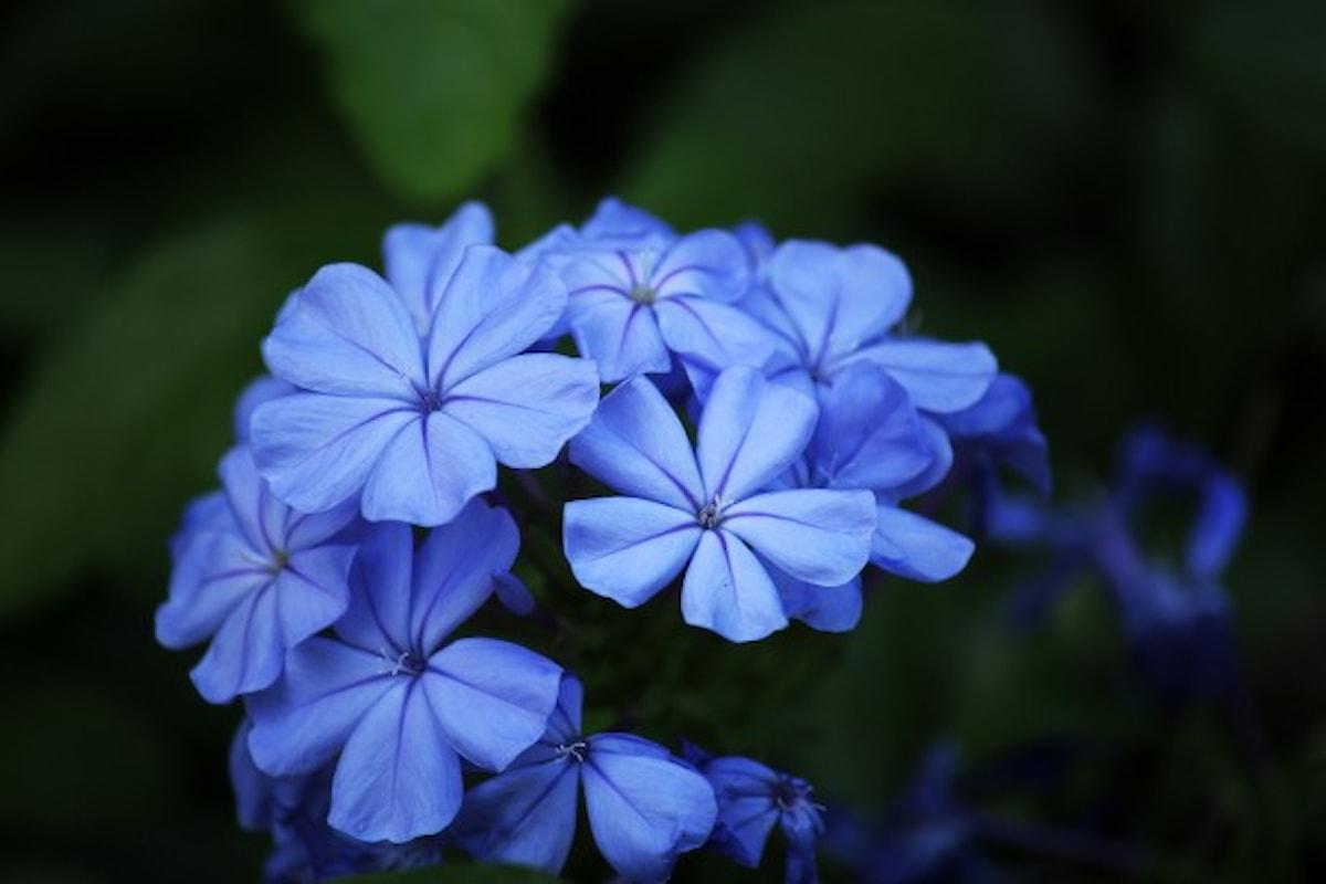 Il fiore è petaloso, l'Accademia della Crusca approva il nuovo termine coniato da un bambino