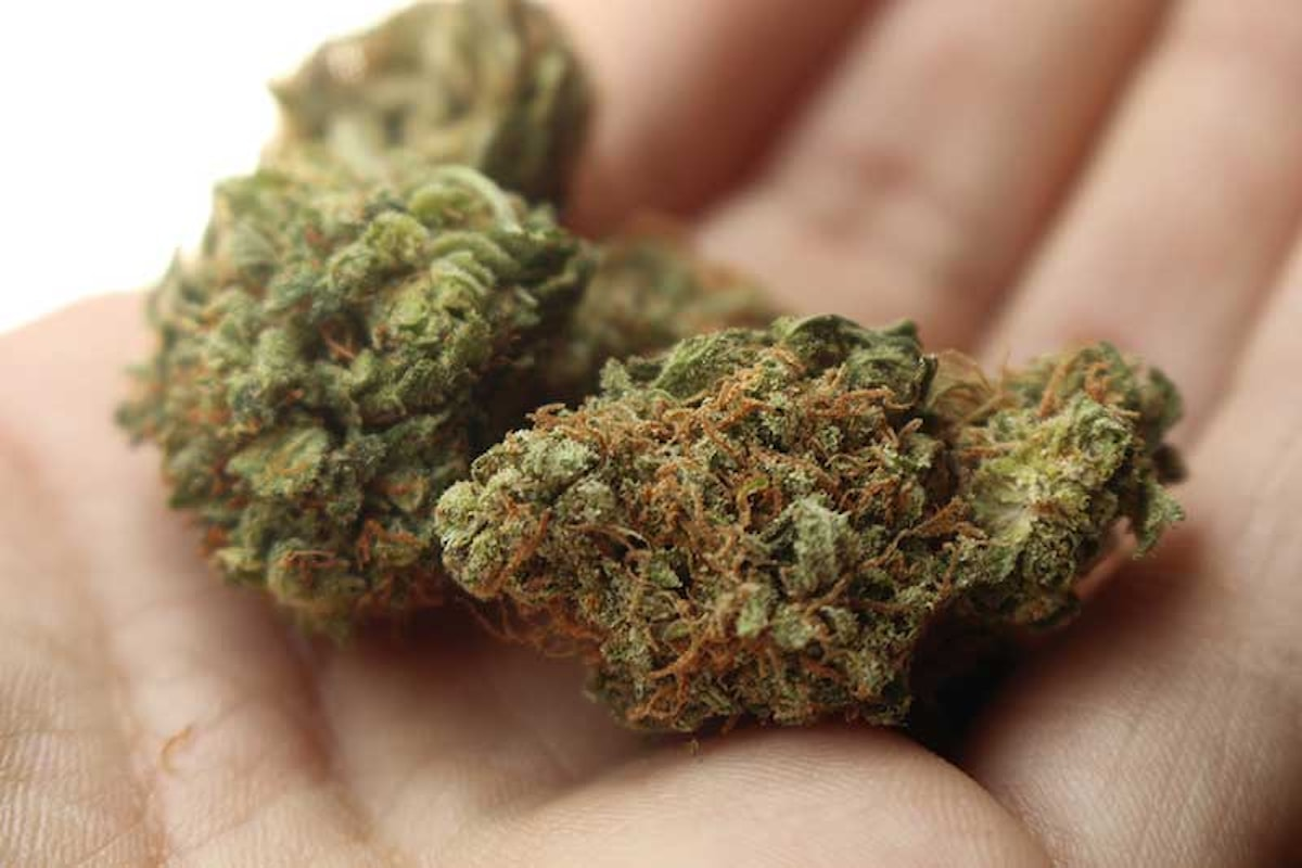 Cannabis terapeutica: Emilia Romagna saccheggiata