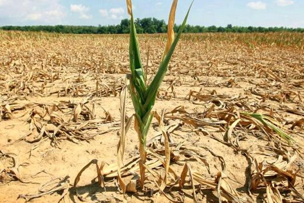 Oltre 2 miliardi, secondo Coldiretti, i danni causati finora dalla siccità
